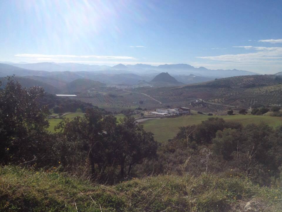 The countryside around Osuna, Andalucía